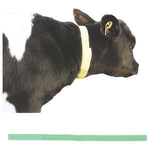 Calf Neck Bands Green 10-pack