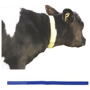 Calf Neck Bands Blue 10-pack